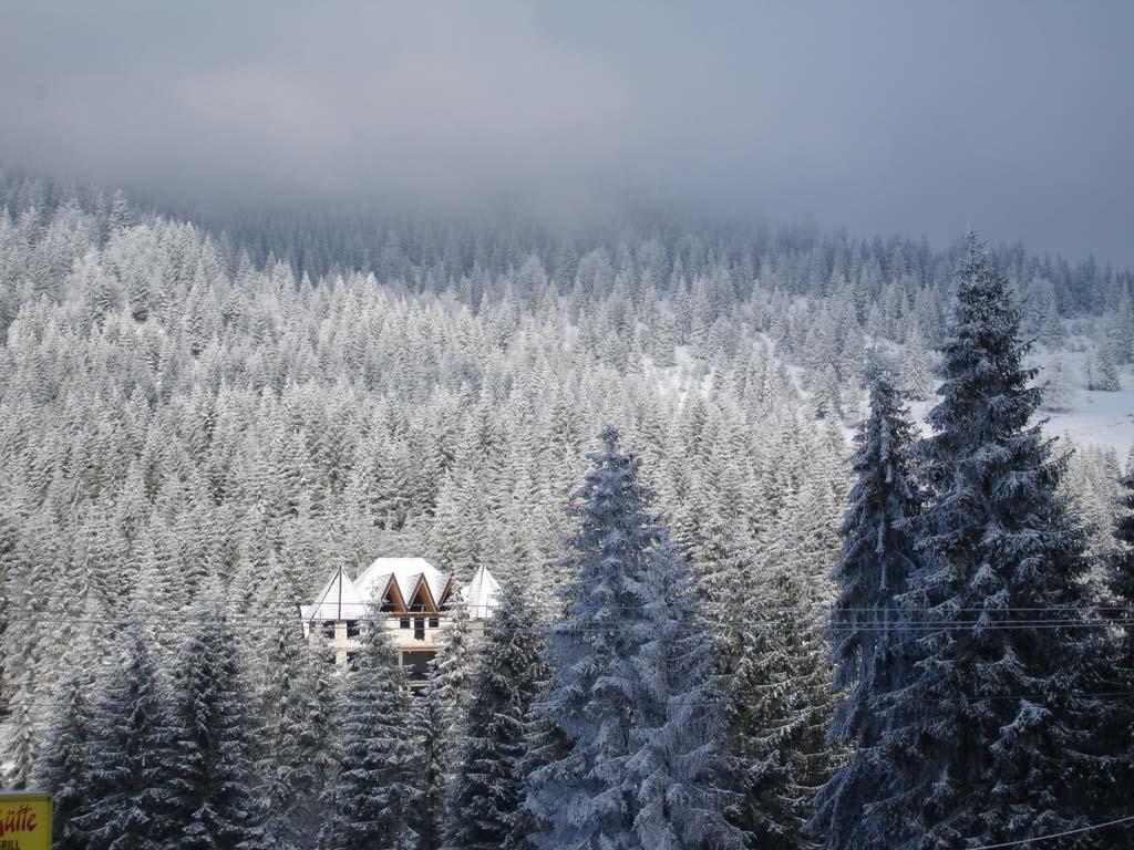 Vedere partia de sky Arieseni, turism Valea Ariesului